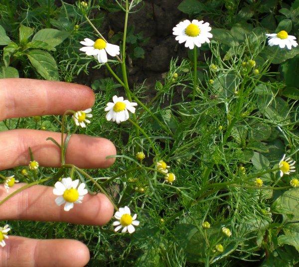 Learn herbalism, growing herbs,, classes & volunteer work ...