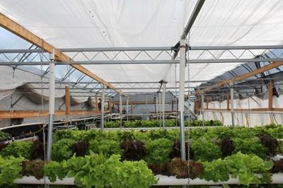 Organic Vegetable Farm for Sale (with aquaponics), Prince
