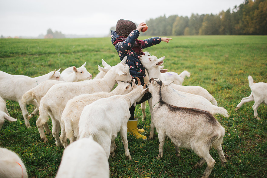 Tremendous Goat Farm Helper Vol Room Board Growing Hope Farm Home Interior And Landscaping Spoatsignezvosmurscom